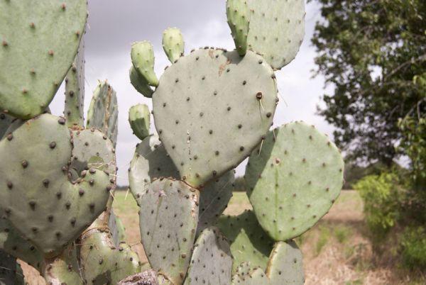 Sarah Haig – Cactus
