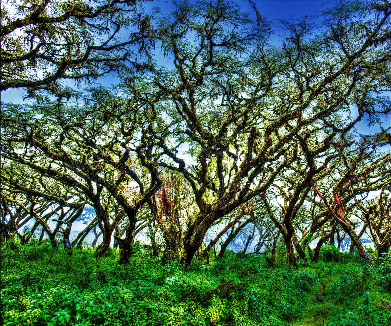 harris-howard-trees-in-the-mist-1