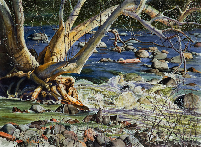2nd_dove_mary-_sedona-az-dry-beaver-creek-sycamore_watercolor_22x30