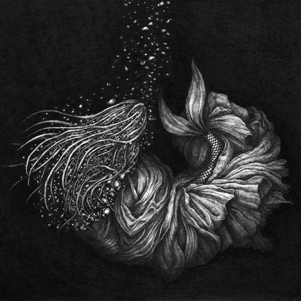 """Marino Nakano – """"Seed"""""""