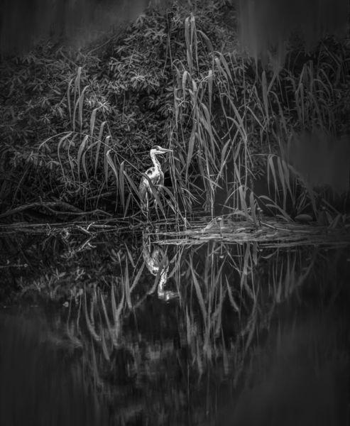 """Leif Sohlman – """"Fairy Tale Heron"""""""