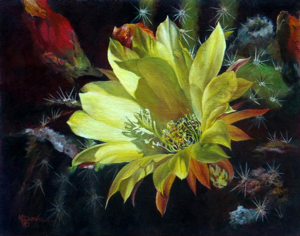 Mary-Dove_Sedona-Arizona-Yellow-Argentine-Giant-Cactus-Flower_Oil-Painting_8x10
