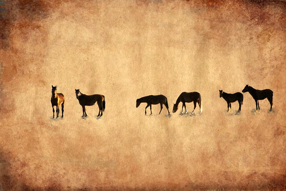 Mink_Gaylord_Wild-horses