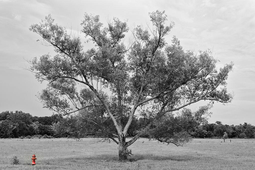 Schmidt_Les_Fire-Tree
